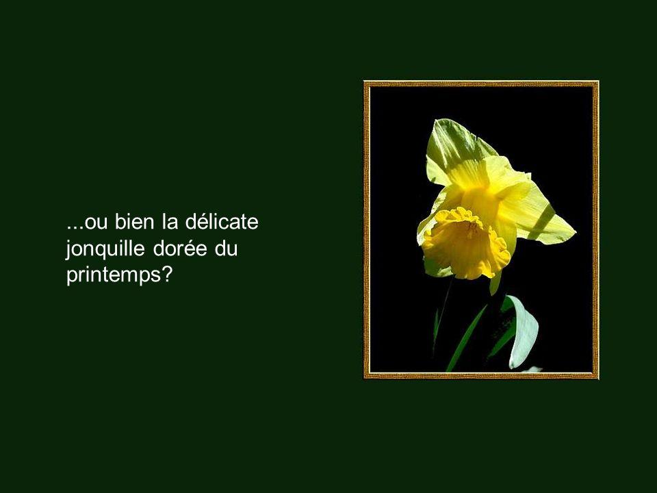 ...ou bien la délicate jonquille dorée du printemps?