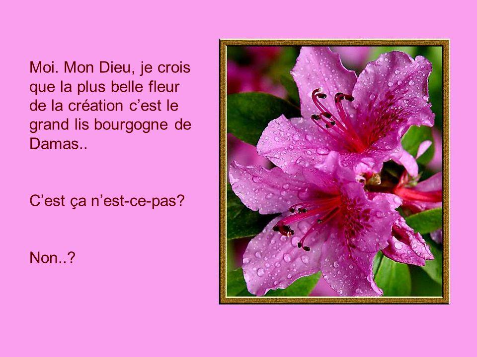 Moi. Mon Dieu, je crois que la plus belle fleur de la création cest le grand lis bourgogne de Damas.. Cest ça nest-ce-pas? Non..?