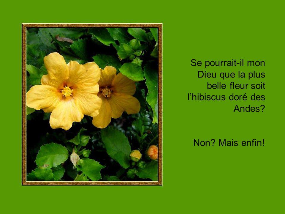 Se pourrait-il mon Dieu que la plus belle fleur soit lhibiscus doré des Andes? Non? Mais enfin!