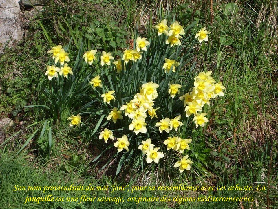 … chante encore plus fort pour annoncer le printemps