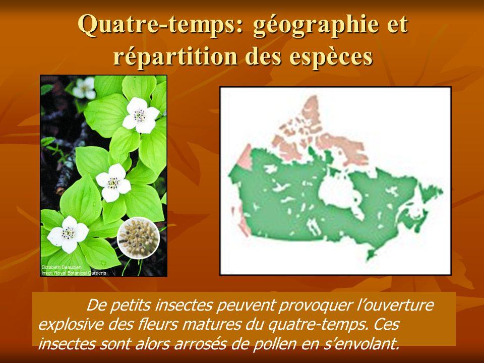 Quatre-temps: géographie et répartition des espèces De petits insectes peuvent provoquer louverture explosive des fleurs matures du quatre-temps.
