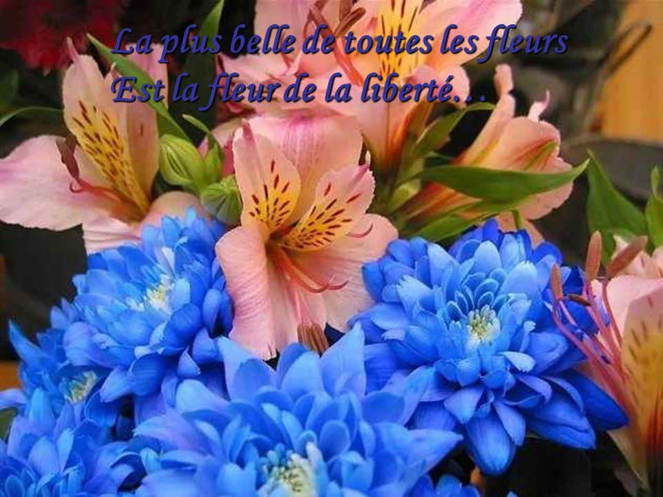 Les fleurs ajoutent une étincelle dans lœil De celui qui les admire…