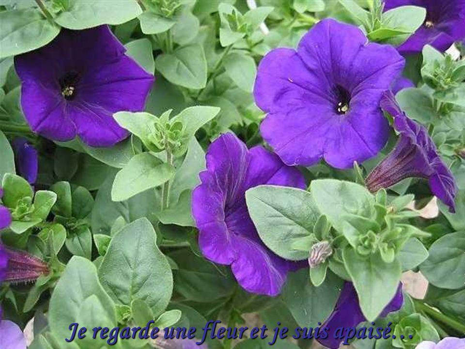 Il y a des fleurs partout pour qui veut bien les voir…
