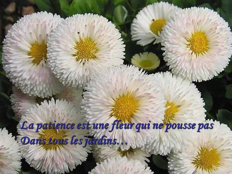 La patience est une fleur qui ne pousse pas Dans tous les jardins…