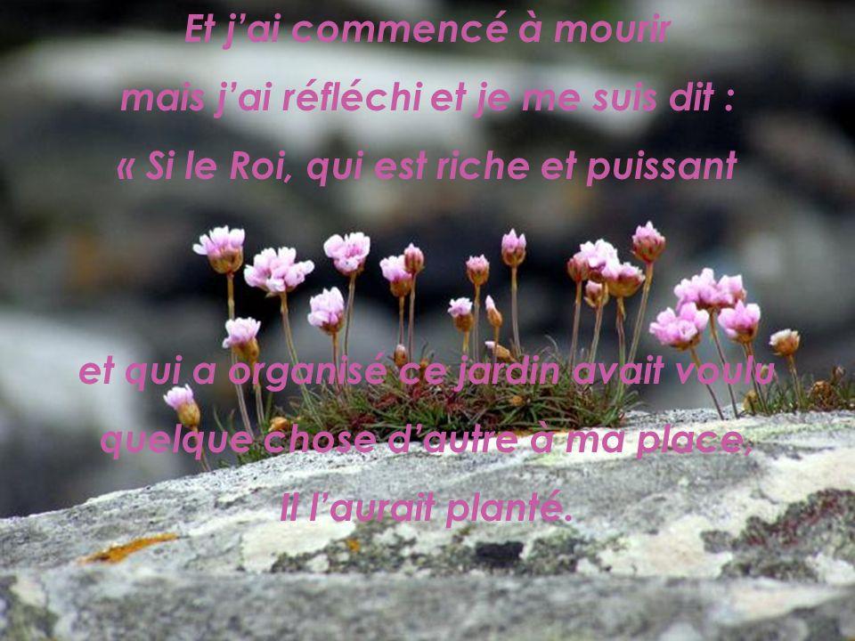 Jamais je naurai la majesté du pin, qui garde sa verdure toute lannée; ni les fruits de la vigne; ni le raffinement et le parfum de la rose.