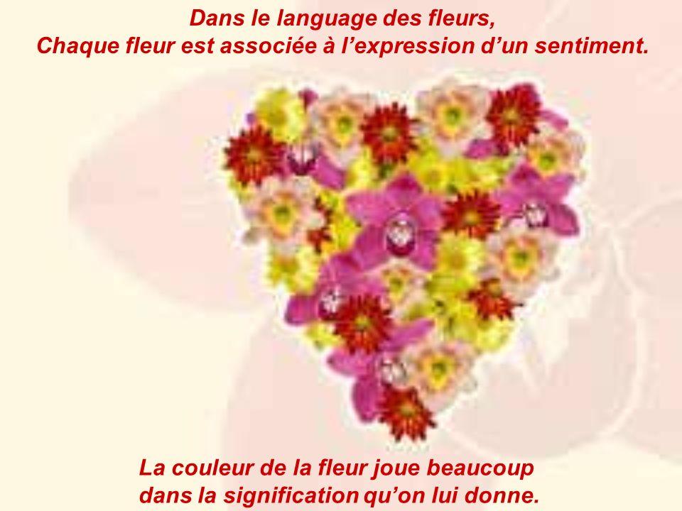 Dans le language des fleurs, Chaque fleur est associée à lexpression dun sentiment. La couleur de la fleur joue beaucoup dans la signification quon lu