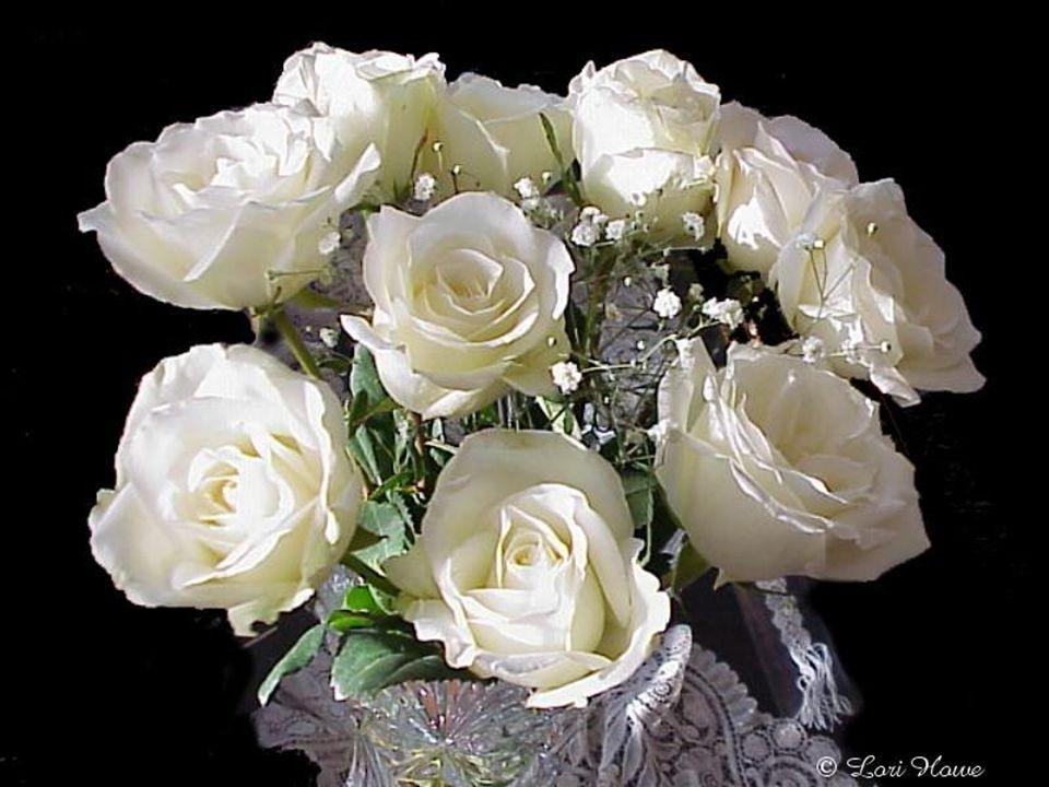 Le blanc symbolise la pureté et la virginité, Mais aussi le raffinement et lélégance. On peut envoyer des fleurs blanches Pour faire une déclaration d