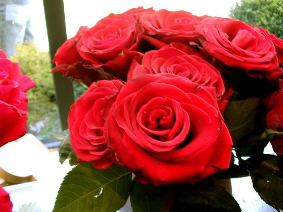 Le rouge est une couleur violente et aggressive, Qui exprime lardeur et la chaleur des sentiments. La fleur rouge sutilisera Pour faire une déclaratio