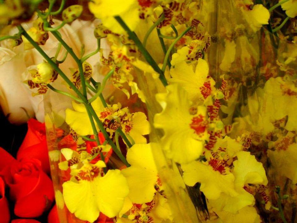 Le jaune est une couleur qui évoque La lumière,le soleil et lharmonie. Les fleurs jaunes exprimeront donc Le bonheur daimer et dêtre aimé(e) Ou plus s