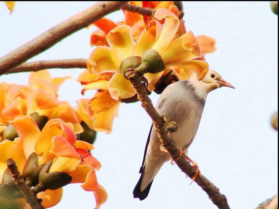 Ferme les yeux et sens, Respire l'odeur du printemps ! Ecoute le chant des oiseaux, Il ny a rien de plus charmant