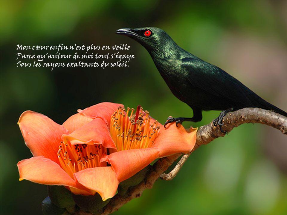 Les oiseaux chantent à tue-tête, Et tous les enfants sont contents On dirait que cest une fête… Ah! que cest joli le printemps