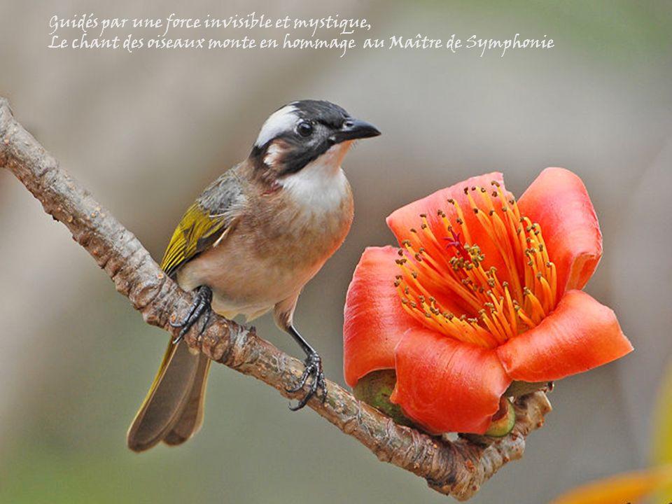 Dans un ballet de cabrioles fantastiques Les oiseaux dansent, s'accouplent et préparent leur nid