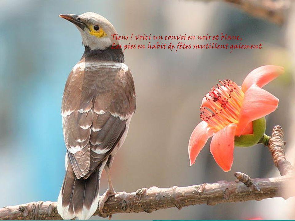 Feuilles séduisantes sur les branches Tendres gazons, fleurs parfumées Brise légère en soupir d ange Dame nature en élégante Se refait une beauté