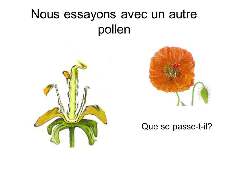 Il faut peut-être utiliser le pollen de la même fleur…