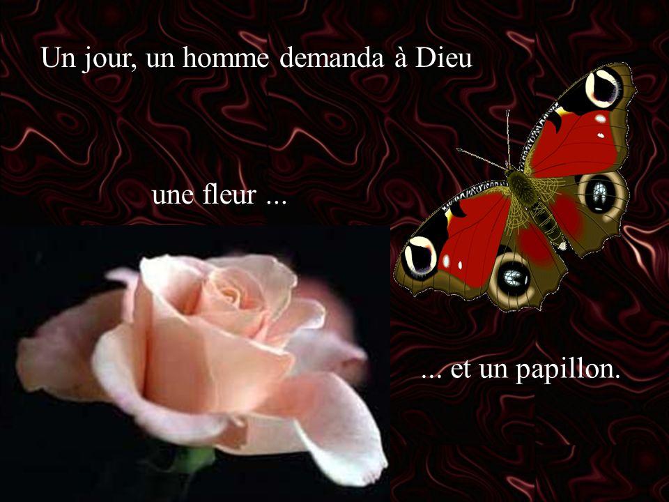 Un jour, un homme demanda à Dieu une fleur...... et un papillon.