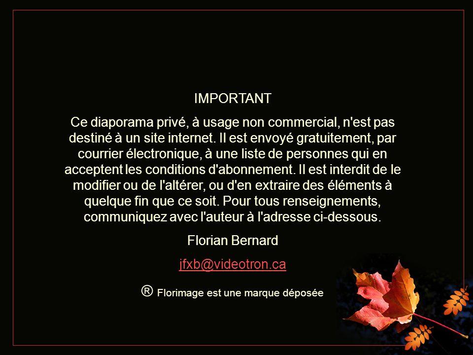 The Godfly Romance - Orchestre d André Rieu Texte et création Florian Bernard Tous droits réservés – 2005 jfxb@videotron.ca