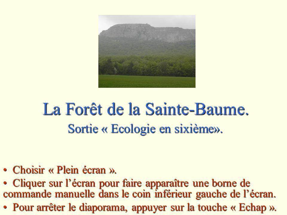 La Forêt de la Sainte-Baume.Sortie « Ecologie en sixième».