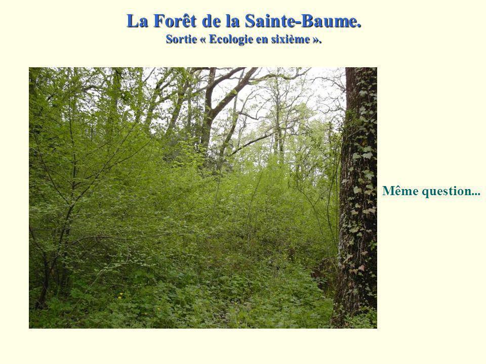 Ce tronc d arbre porte du lierre et des lichens.