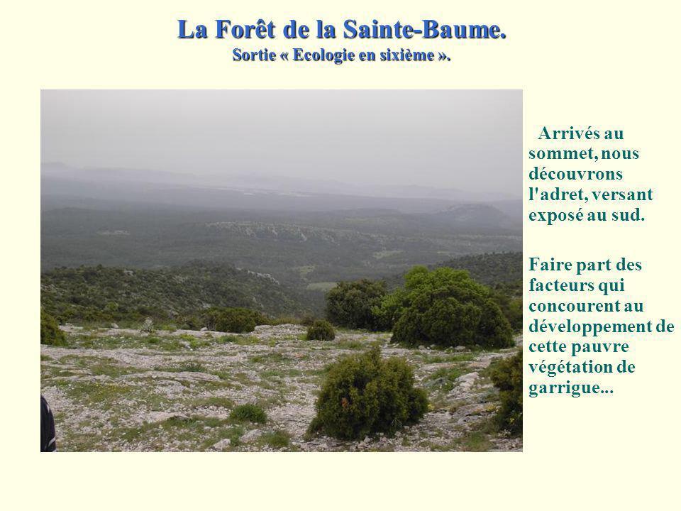 Une source d'eau nichée dans un décor aux allures mystiques… Emettre des hypothèses quant à lorigine de leau qui sécoule. La Forêt de la Sainte-Baume.