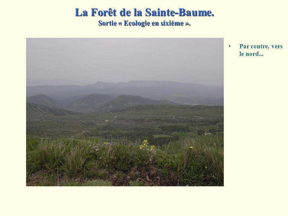 Arrivés au sommet, nous découvrons l'adret, versant exposé au sud. Faire part des facteurs qui concourent au développement de cette pauvre végétation