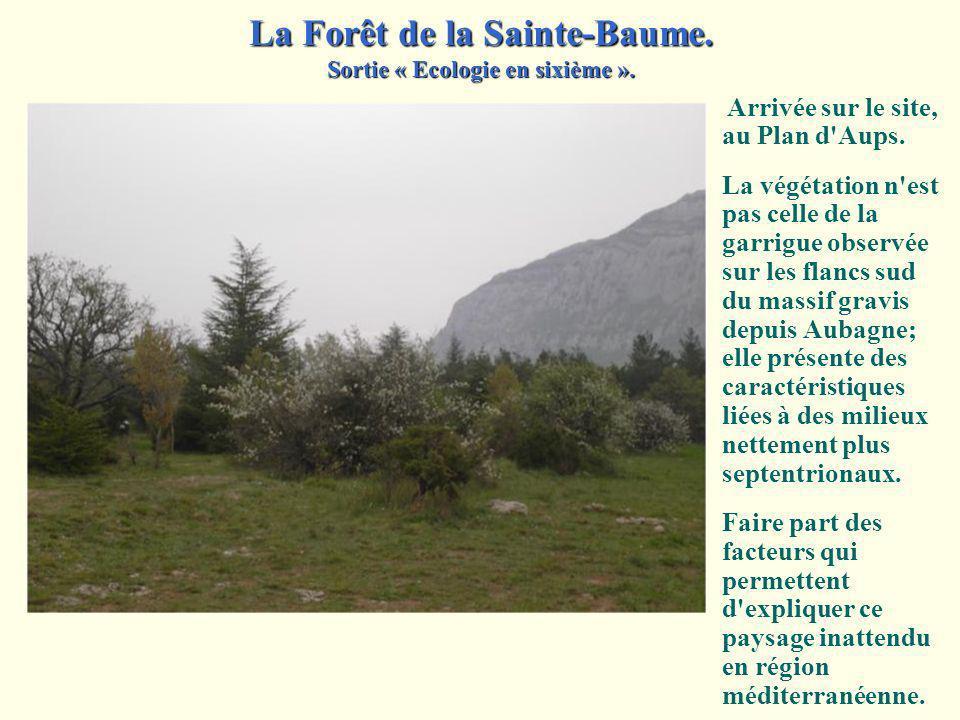 La Forêt de la Sainte-Baume.Sortie « Ecologie en sixième ».