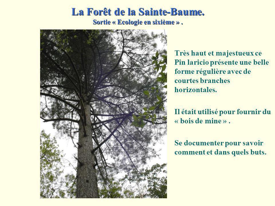 Lire les inscriptions portées sur ces panneaux indicateurs. Sur une carte du Massif de la Sainte-Baume, situer ces chemins et ces destinations. La For