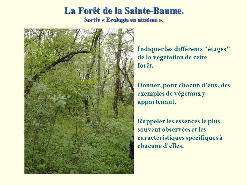 Par contre, vers le nord... La Forêt de la Sainte-Baume. Sortie « Ecologie en sixième ».