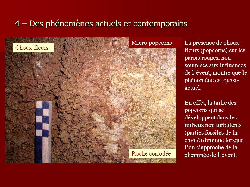 4 – Des phénomènes actuels et contemporains La présence de choux- fleurs (popcorns) sur les parois rouges, non soumises aux influences de lévent, mont