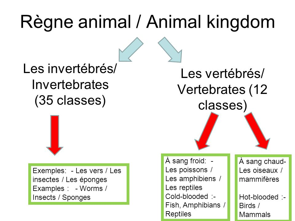 Règne animal / Animal kingdom Les invertébrés/ Invertebrates (35 classes) Exemples: - Les vers / Les insectes / Les éponges Examples : - Worms / Insec