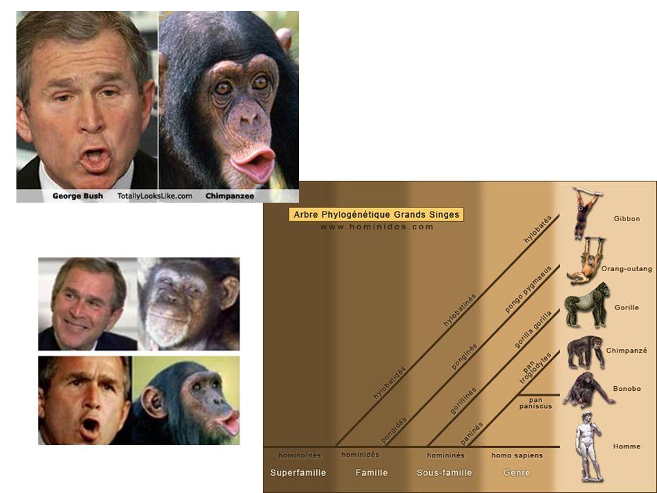 Homo Sapiens (Règne animal / Classe Mammifères /famille des hominidés)