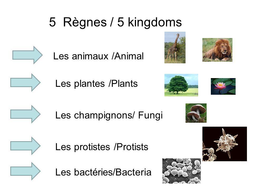 5 Règnes / 5 kingdoms Les animaux /Animal Les plantes /Plants Les champignons/ Fungi Les protistes /Protists Les bactéries/Bacteria