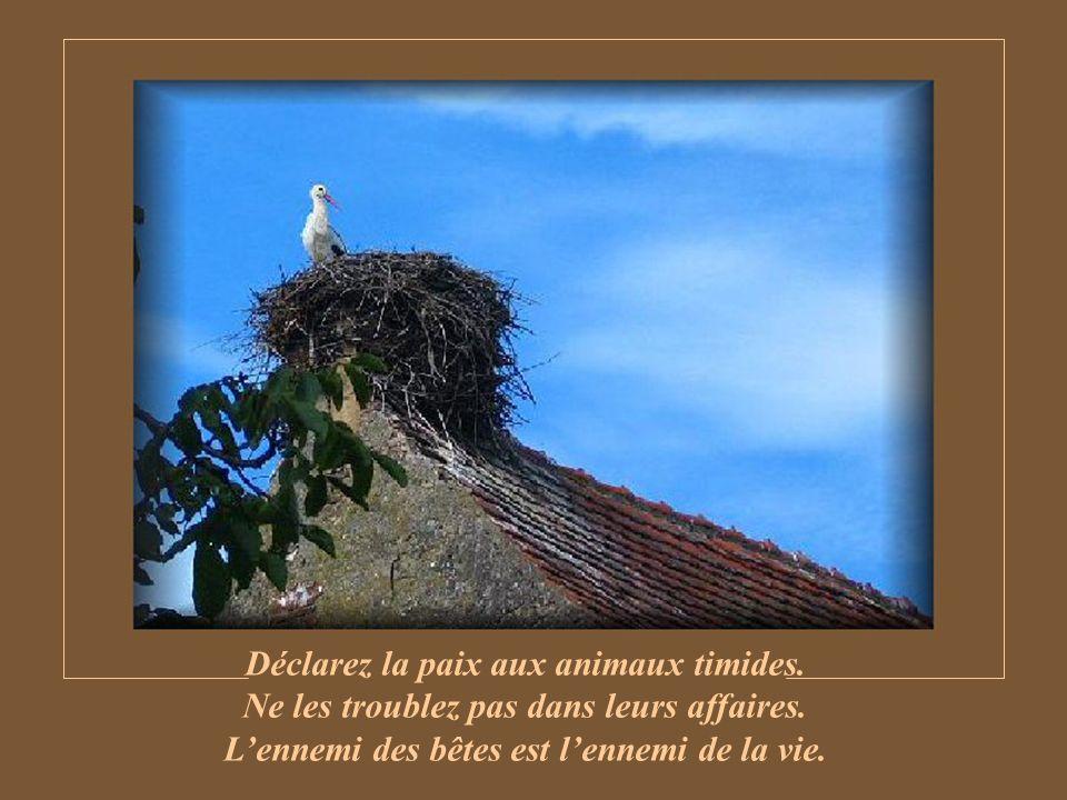Oiseaux, chevreuils, lapins, chamois, et tout ce petit peuple de poil et de plume ont désormais besoin de votre amitié pour survivre.