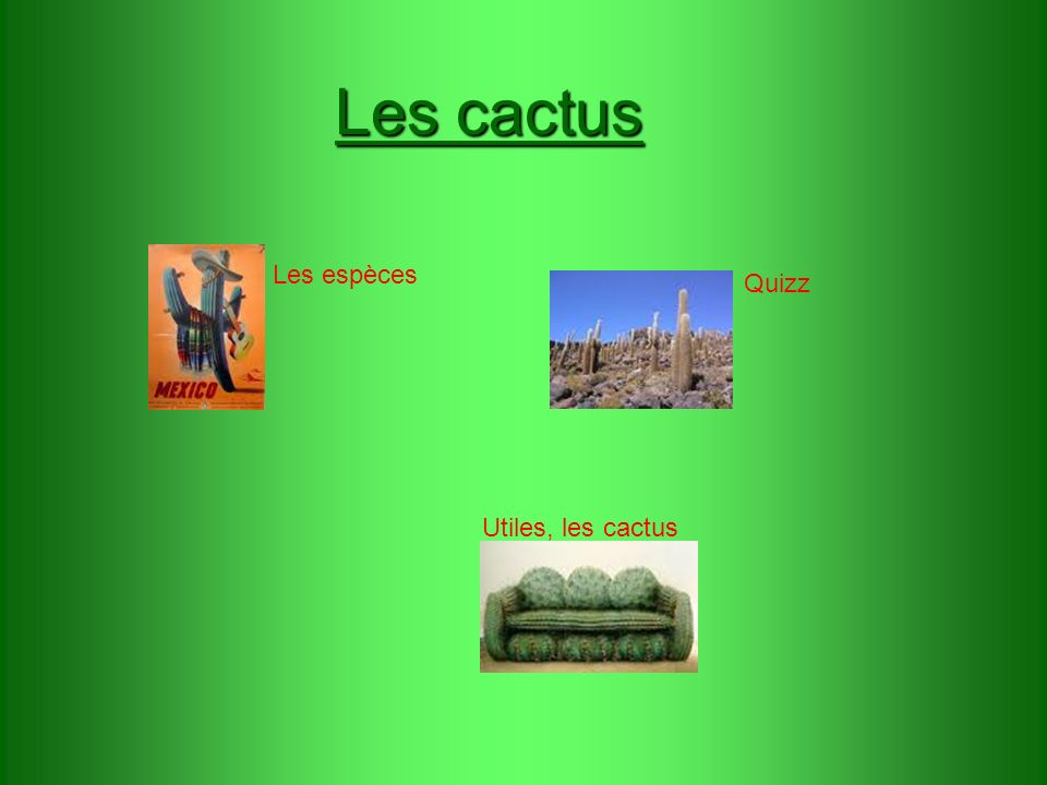 Les cactus Utiles, les cactus Les espèces Quizz