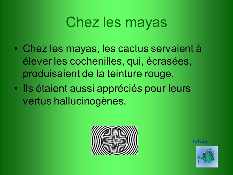 Utiles, les cactus Chez les mayas Autres utilisations menu