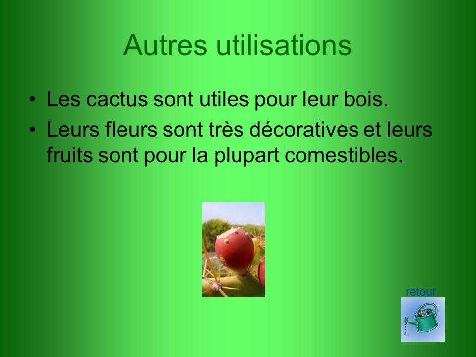 Autres utilisations Les cactus sont utiles pour leur bois.