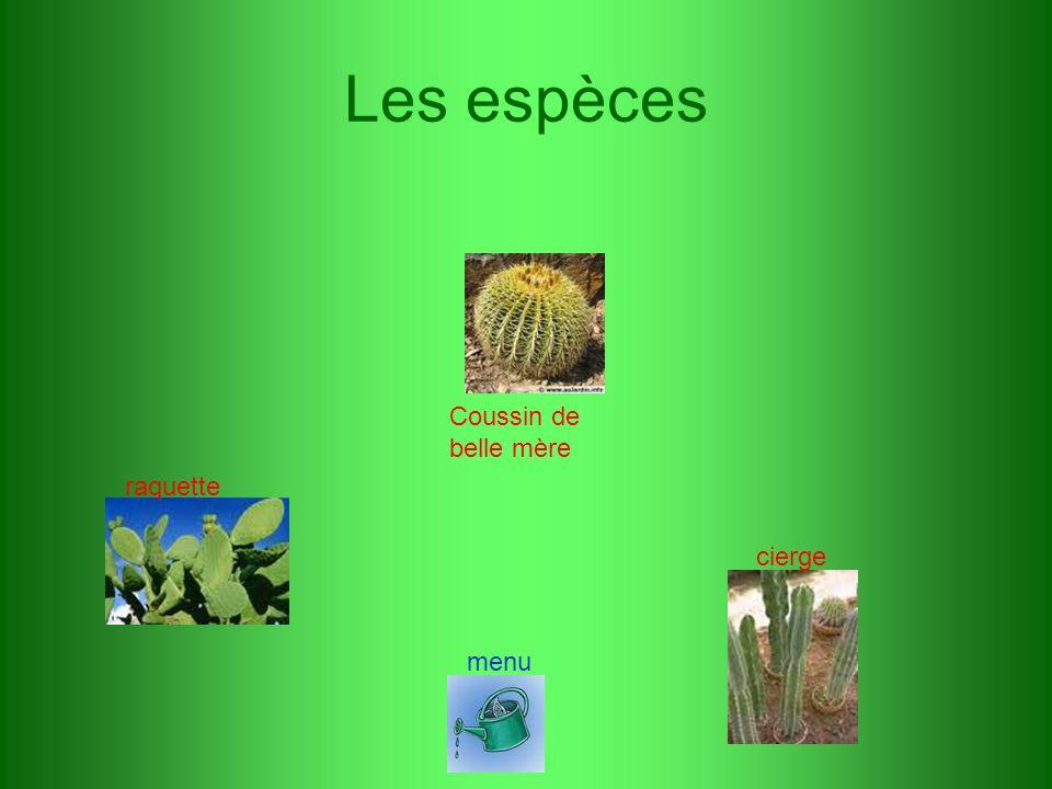 Les espèces Coussin de belle mère cierge raquette menu