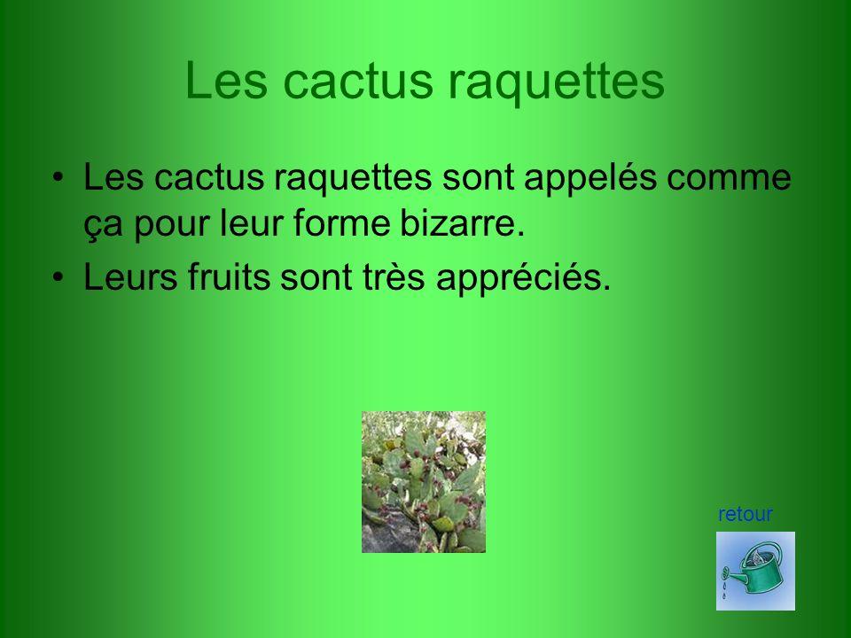 Les cactus raquettes Les cactus raquettes sont appelés comme ça pour leur forme bizarre.