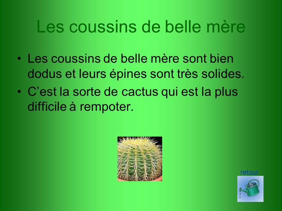 Les cactus cierges Les cactus cierges sont les plus connus.