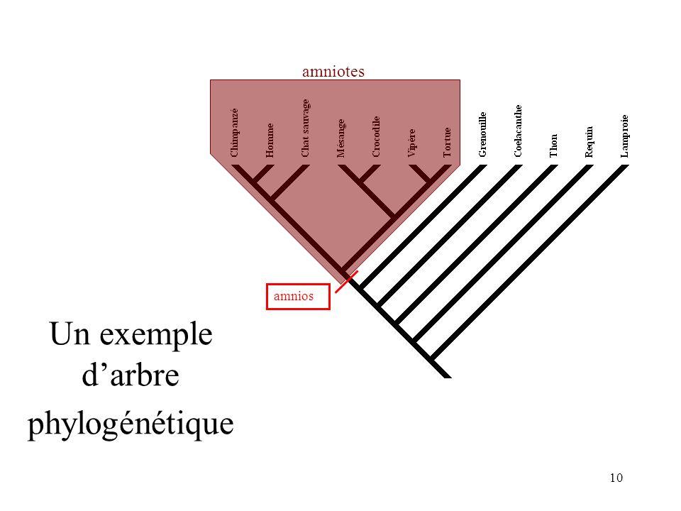 10 Un exemple darbre phylogénétique amnios amniotes