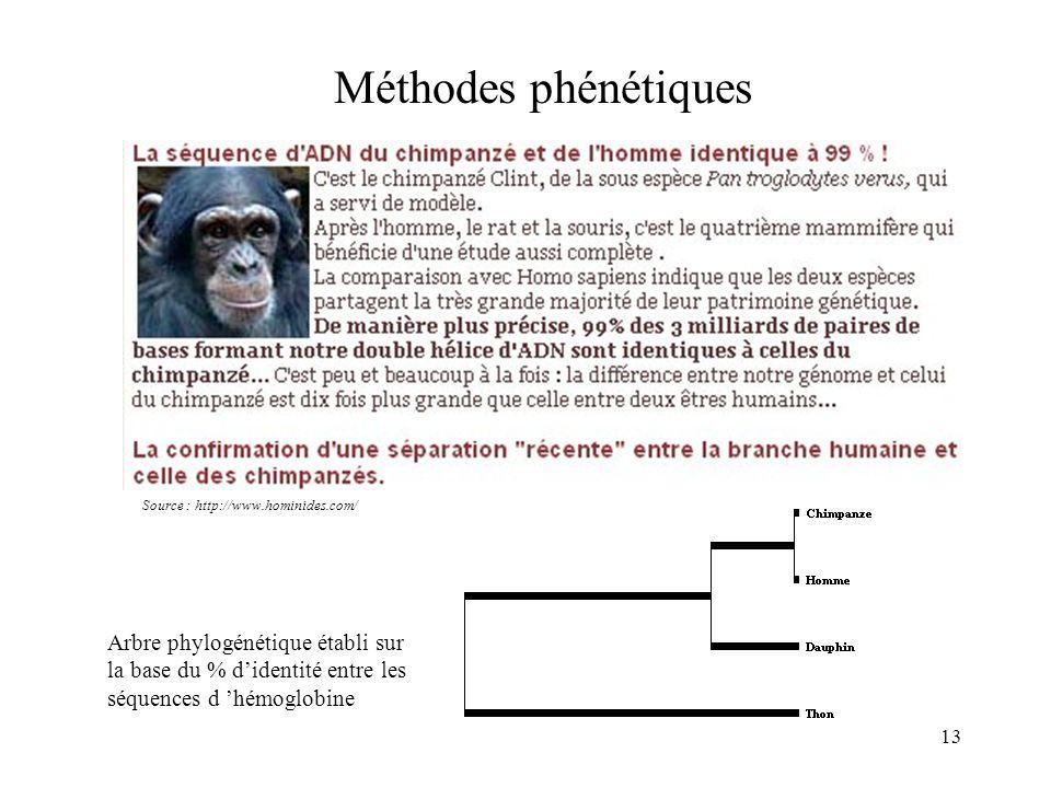 13 Méthodes phénétiques Arbre phylogénétique établi sur la base du % didentité entre les séquences d hémoglobine Source : http://www.hominides.com/