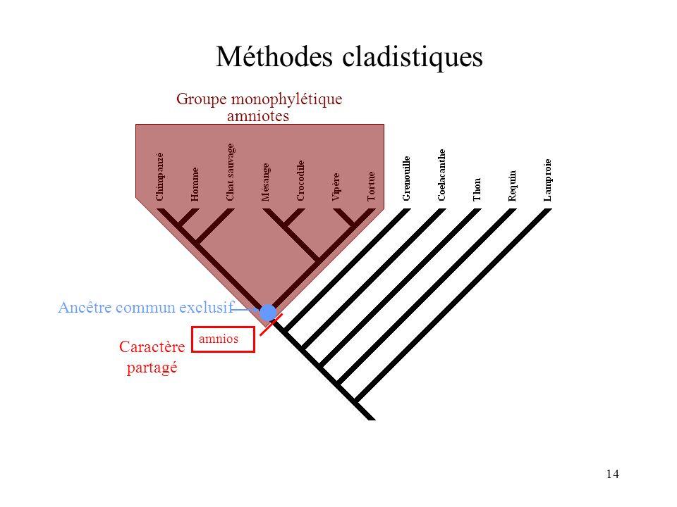 14 Méthodes cladistiques amnios amniotes Caractère partagé Groupe monophylétique Ancêtre commun exclusif