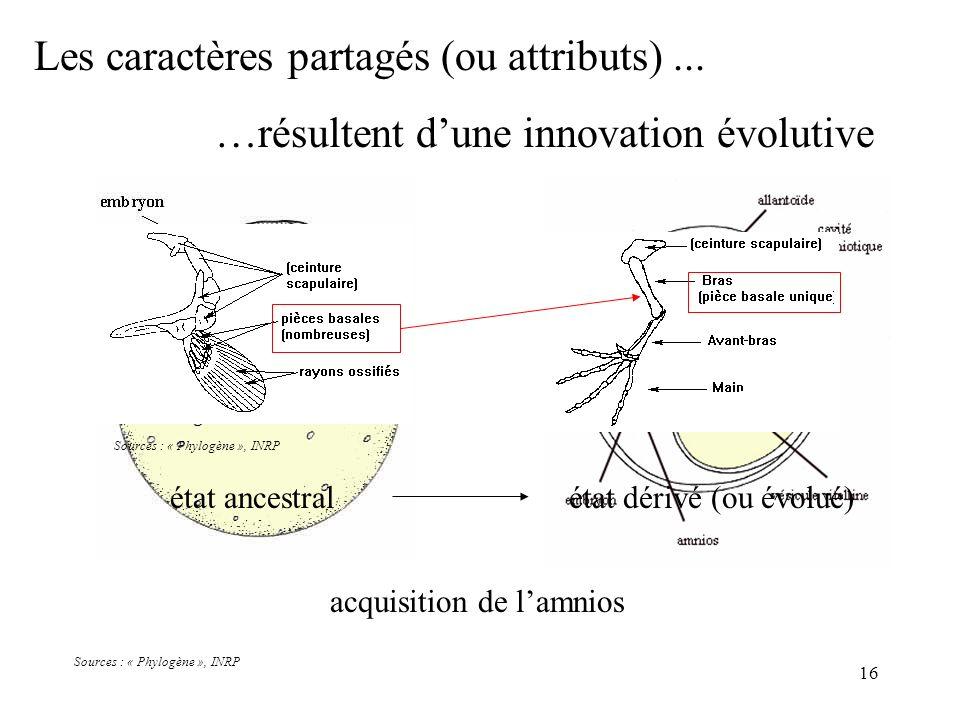 16 acquisition de lamnios Sources : « Phylogène », INRP Les caractères partagés (ou attributs)... …résultent dune innovation évolutive état ancestralé