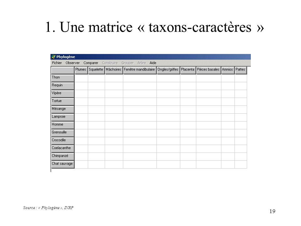 19 1. Une matrice « taxons-caractères » Source : « Phylogène », INRP