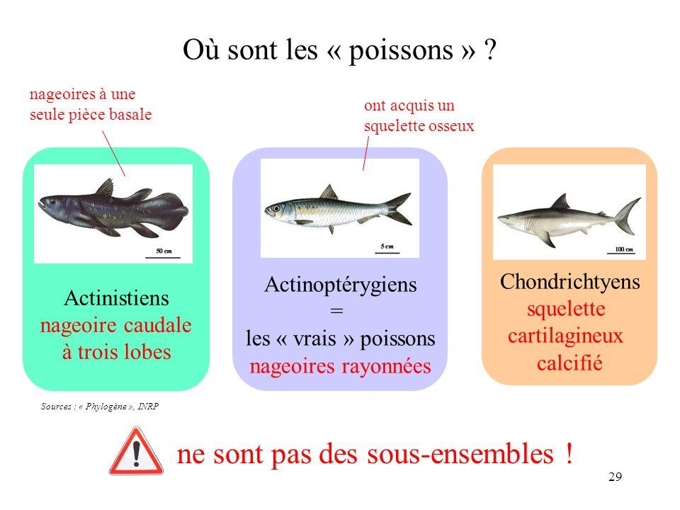 29 Actinistiens nageoire caudale à trois lobes Actinoptérygiens = les « vrais » poissons nageoires rayonnées Chondrichtyens squelette cartilagineux ca