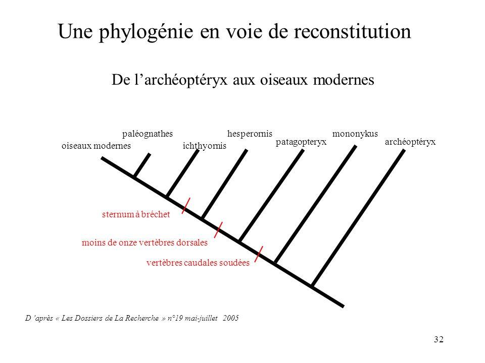 32 De larchéoptéryx aux oiseaux modernes Une phylogénie en voie de reconstitution D après « Les Dossiers de La Recherche » n°19 mai-juillet 2005 oisea