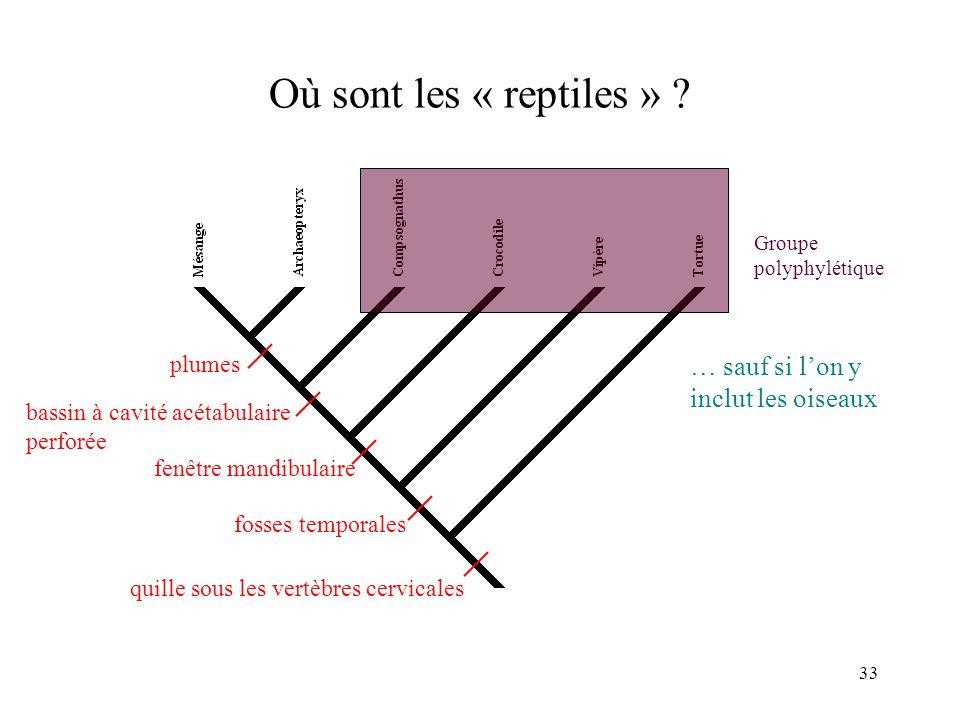 33 Où sont les « reptiles » ? quille sous les vertèbres cervicales fosses temporales fenêtre mandibulaire bassin à cavité acétabulaire perforée plumes