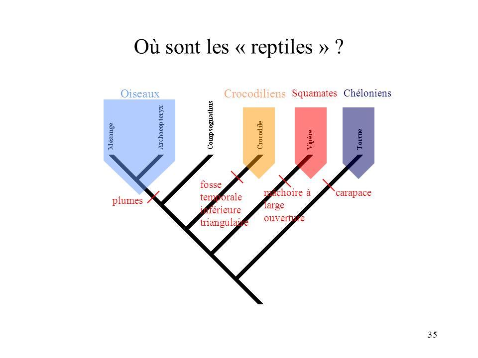 35 Où sont les « reptiles » ? Oiseaux plumes Chéloniens carapace Crocodiliens fosse temporale inférieure triangulaire Squamates mâchoire à large ouver