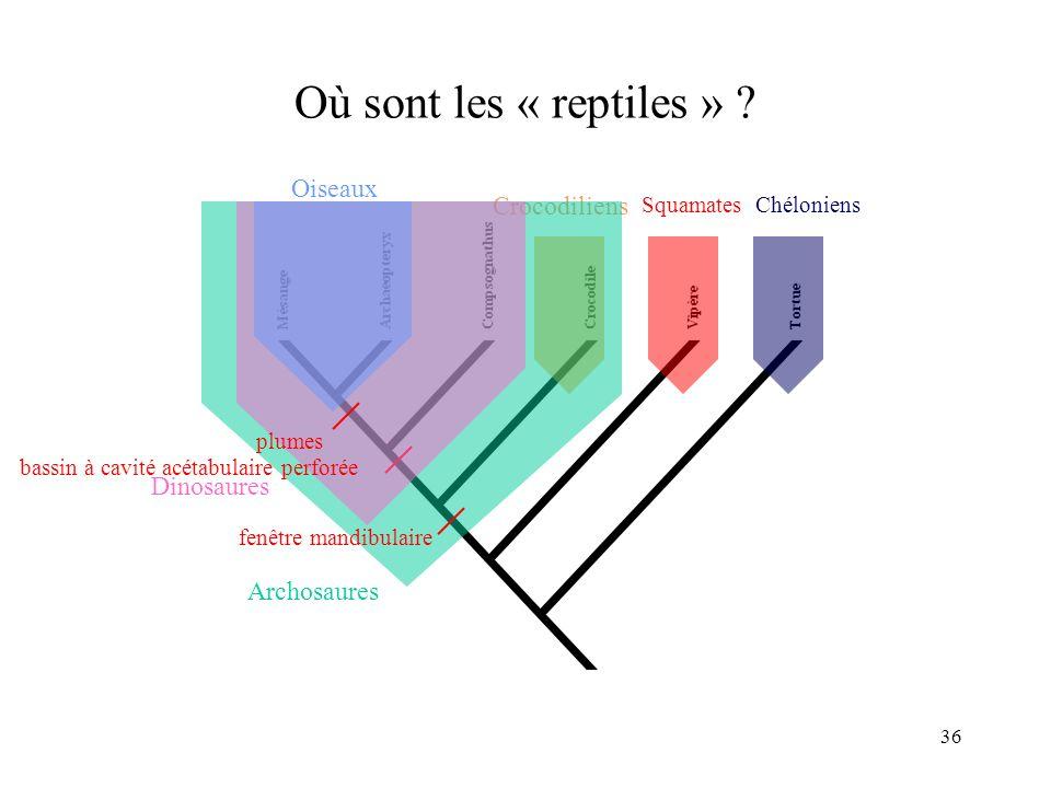 36 Où sont les « reptiles » ? Crocodiliens SquamatesChéloniens Archosaures fenêtre mandibulaire Dinosaures bassin à cavité acétabulaire perforée plume