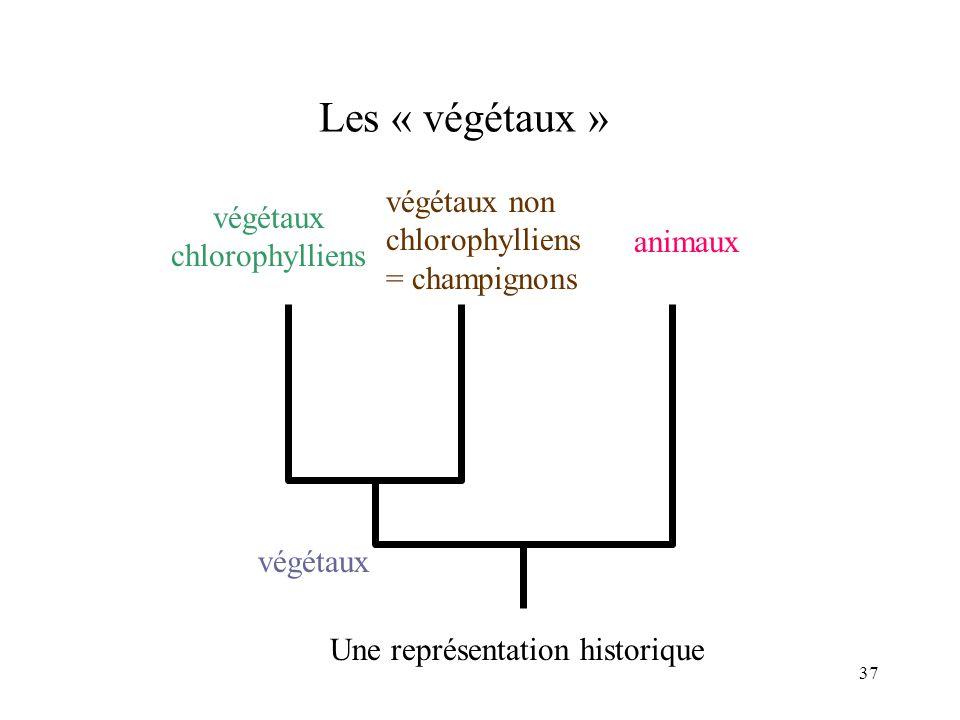 37 Les « végétaux » végétaux végétaux chlorophylliens animaux végétaux non chlorophylliens = champignons Une représentation historique