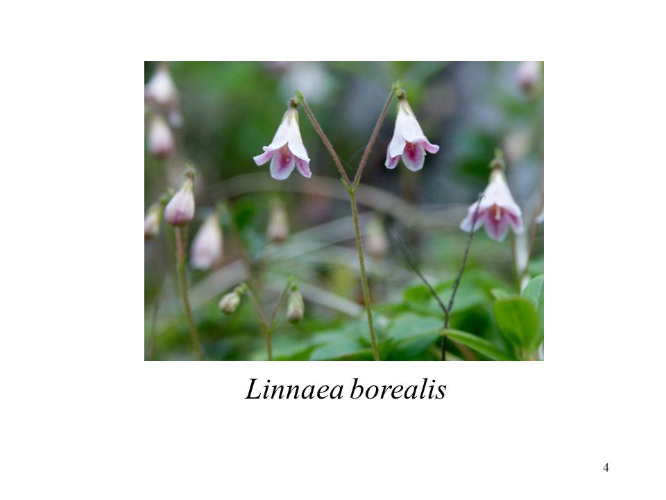 5 mais... Linné est un fixiste